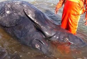 baleines 2