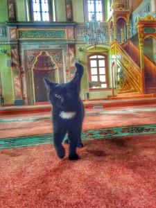 [VIDÉO] - En Turquie, un imam ouvre les portes d'une mosquée pour y accueillir les chats !